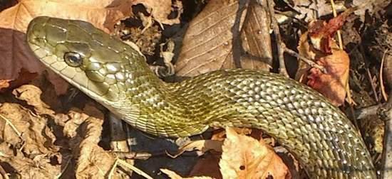 unknown snake