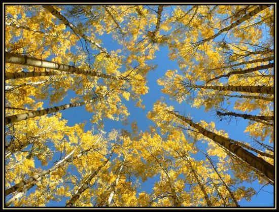 Autumn Sky (Sept 2006)