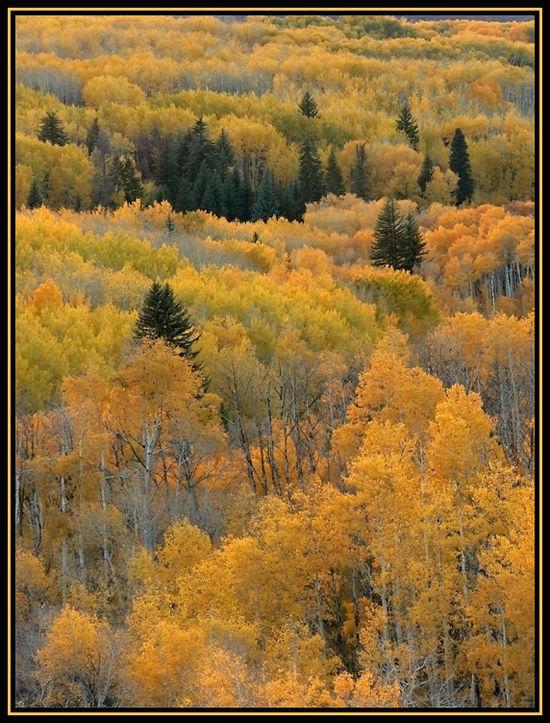 Aspen Glow (Oct 2006)