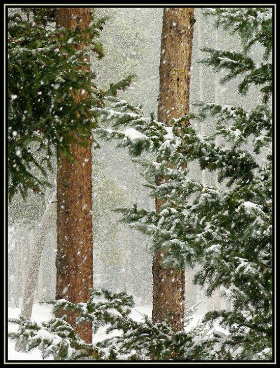 Winter Blanket (Oct 2006)