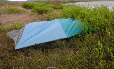 tarp with tree inside