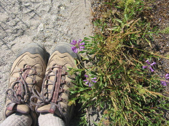 pct feet