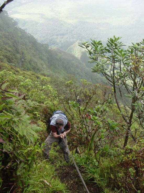 Climbing Mt. Ka'ala with rough cord.  Photo Credit, E. Mathis.