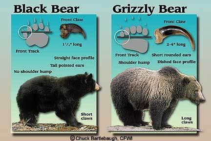bearcompare