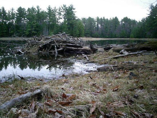Beaver Den