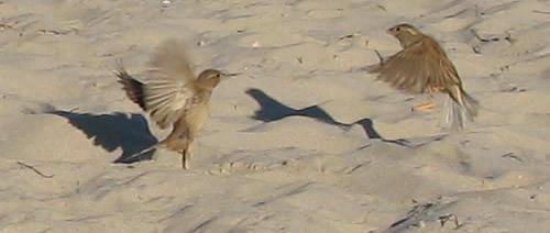 Avian choreography