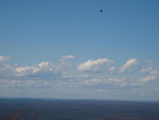 some bird flying near High Point SP, NJ on the Kittatinny Ridge