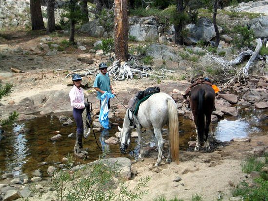Horses at Piute Creek