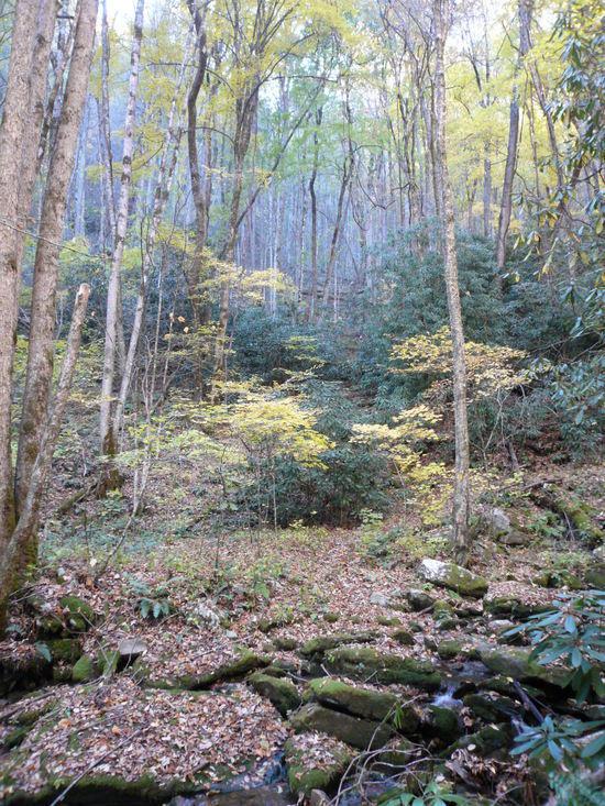 ledbetter creek