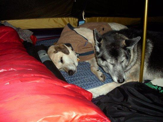 dogs camped