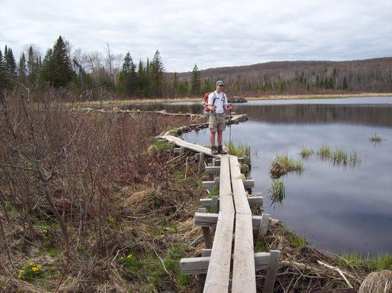 Sawmill Bog - yup, that's a boardwalk on top of a beaver dam