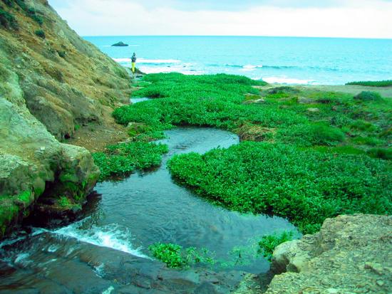 Green Carpet to the Sea