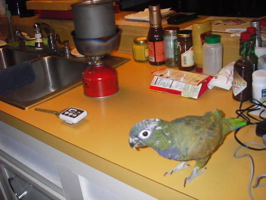 Betty Crocker Parrot