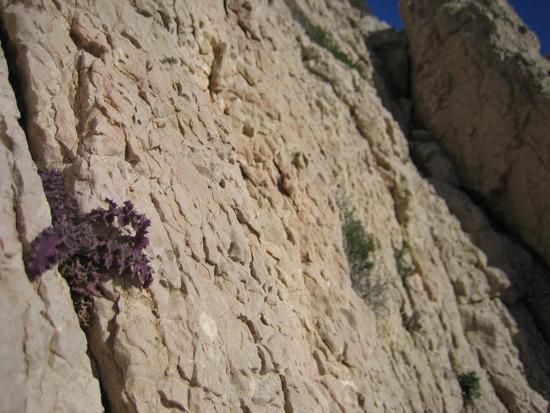 plantrock