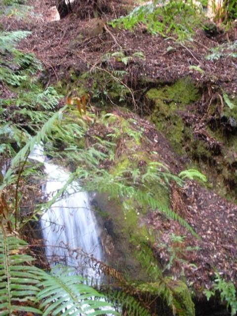 Waterfall in Pescadero Creek State Park