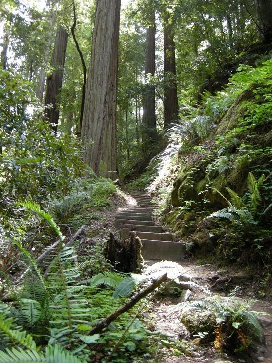 Nice Stairway