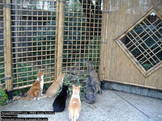 catfence