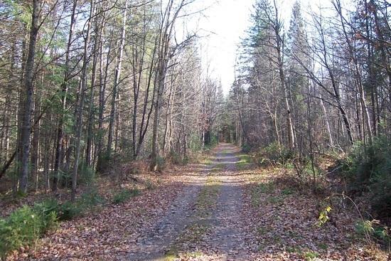 Mew Lake Road