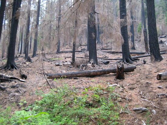 Fire Damaged Trail - 1