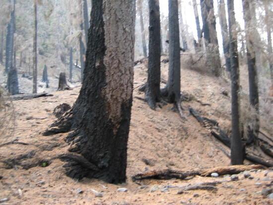 Fire Damaged Trail - 2