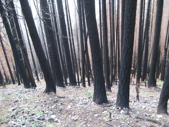 Fire Damage - 1