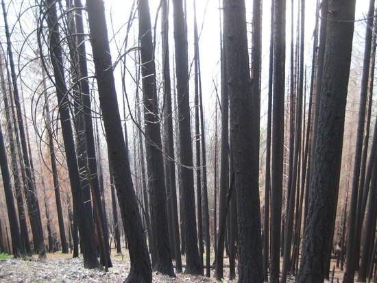 Fire Damage - 2