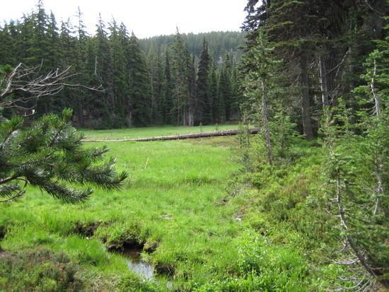 Alpine Meadow - 1