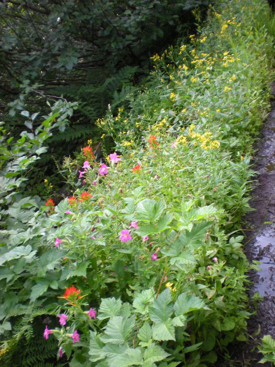 Wild flowers along the Hunt's Creek Trail