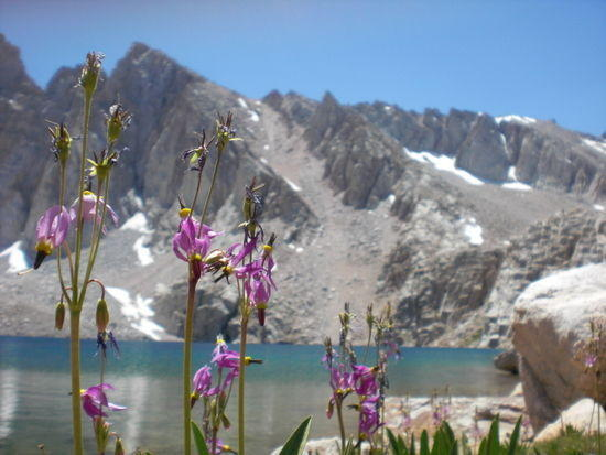 More alpine tundra flowers