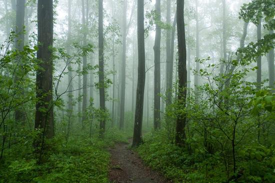 Appalachian Trail -- GA
