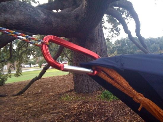 Hammock and tarp clipped together