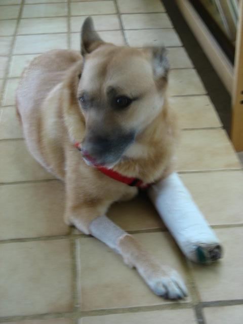 Casey in a cast