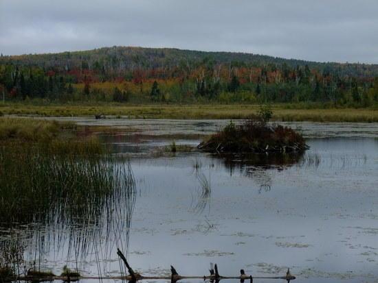 sawmill creek bog