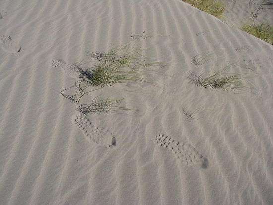 firm sand