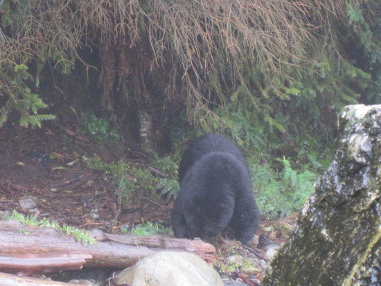 Bear Pic2