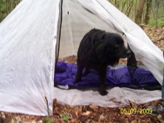 z shelter