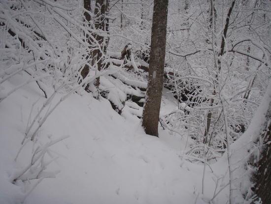 Snowy Trail near Cody Gap