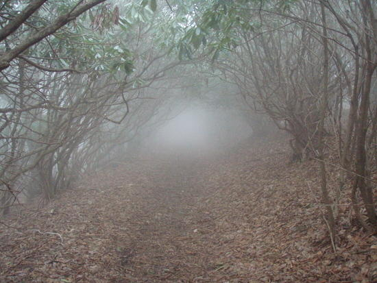 Foggy Green Tunnel near Max Patch