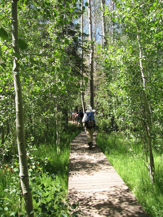 Lush Green Trail to Spooner Lake