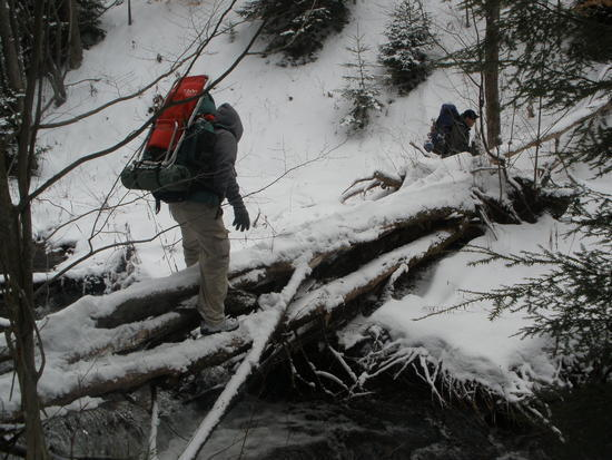 Loc crossing a fallen tree