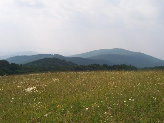 Max Patch on the AT 2008