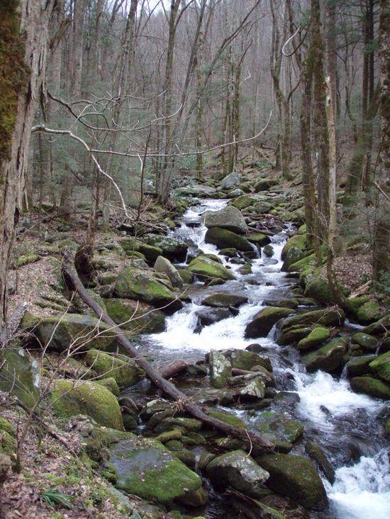 Cascade on Low Gap Trail