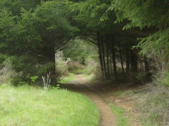 nature tunel