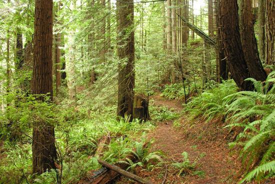 Soth Fork Trail
