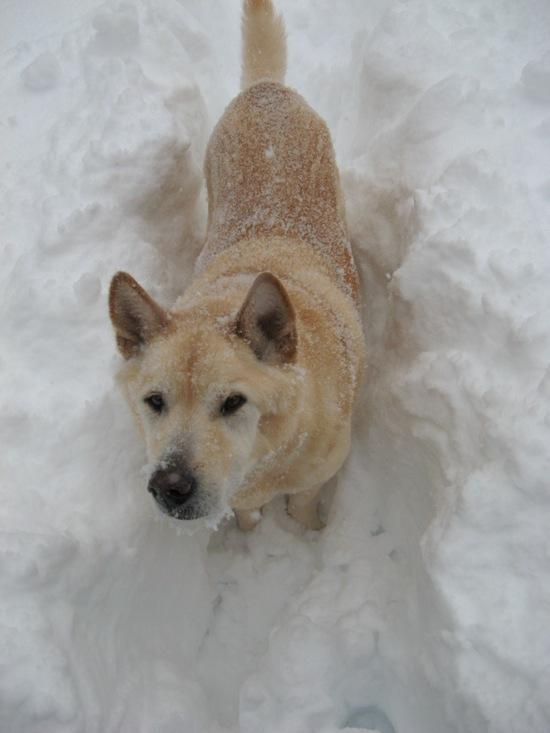 Chance in snow