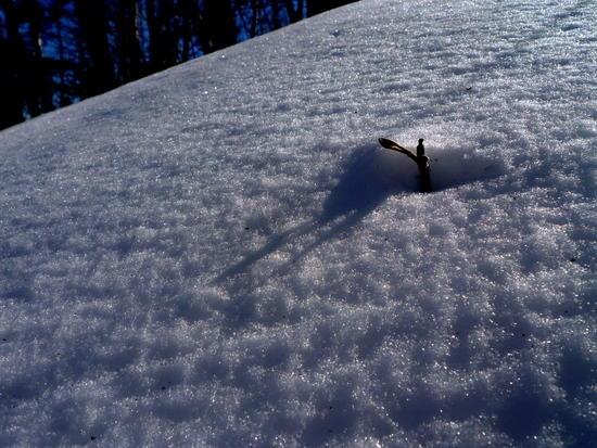 Sun on Snow 3-5-10