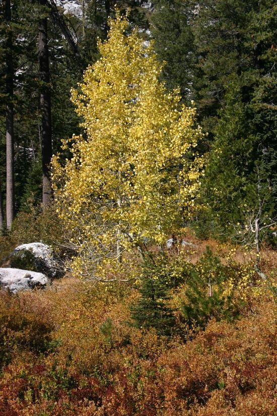 Trinity Alps, Fall 2009