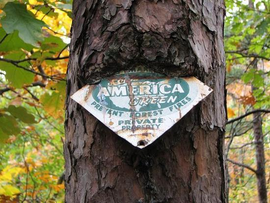 Sign in tree