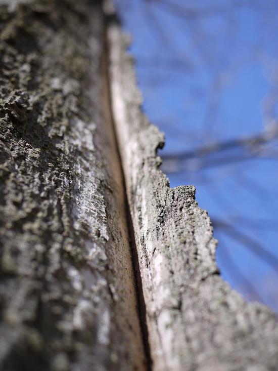 Tree with Depth