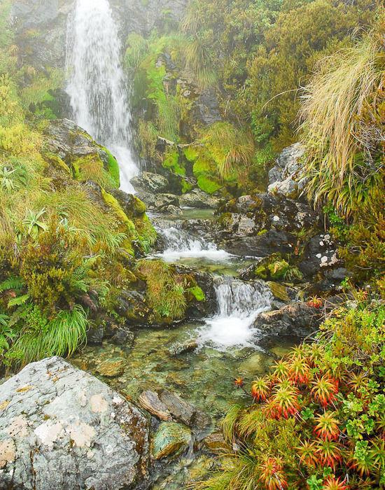 Tropical Cascade